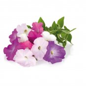 Click and Grow Smart Garden Refill 3-pack - Petunia