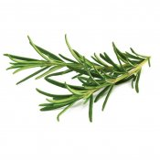 Click and Grow Smart Garden Refill 3-pack - Rosemary