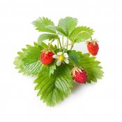 Click and Grow Smart Garden Refill 3-pack - Wild Strawberry